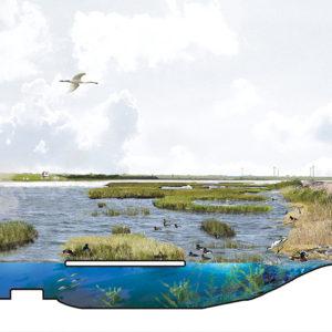 Posad-1208-Ecologisch-systeem-Markerkmeer-IJmeer-Featured