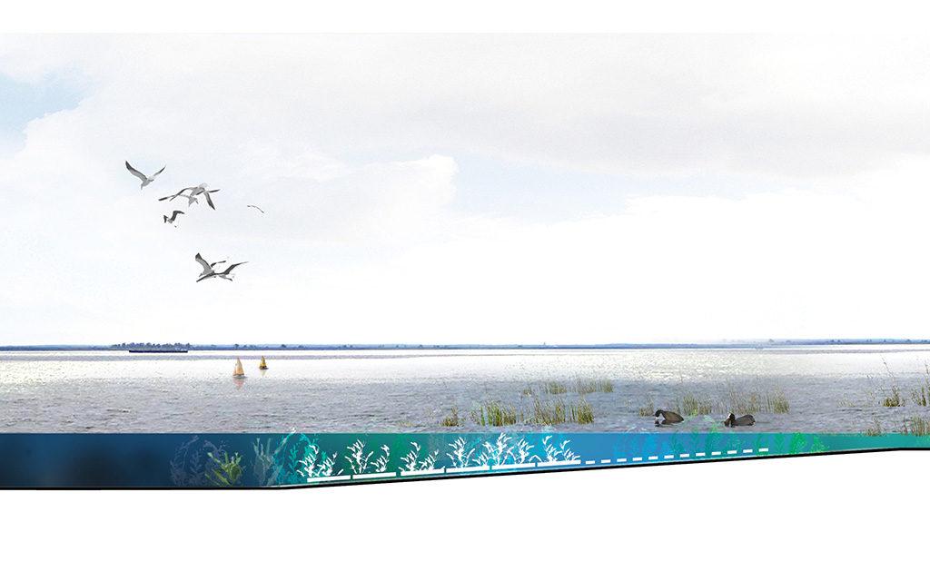 Posad-1208-Ecologisch-systeem-Markerkmeer-IJmeer-Impressie-kunstmatige-waterplanten