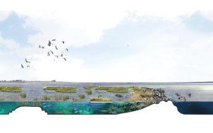 Posad-1208-Ecologisch-systeem-Markerkmeer-IJmeer-Impressie-stepping-stones